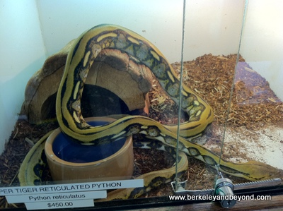 BERKELEY-East Bay Vivarium-Snake-9-12-400pix(iPhone-c2012CaroleTerwilligerMeyers)