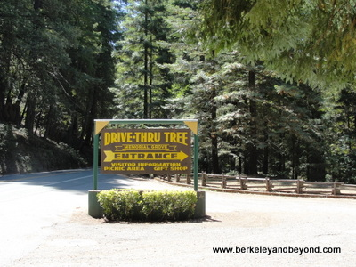 AVENUE OF GIANTS-LEGGETT-Drive-Thru Tree-sign 1-c2015 Carole Terwilliger Meyers-400pix-