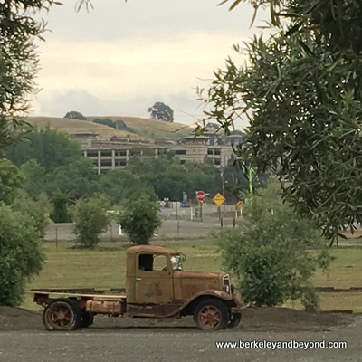 WOODLAND-Hwy 16-Brooks-Seka Hills Olive Oil-old truck+view of Cache Creek Casino-c2016 Carole Terwilliger Meyers-fnl-400pix