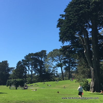 SF-Golden Gate Park-Robin Williams Meadow+Hippie Hill-c2018 Carole Terwilliger Meyers-400pix