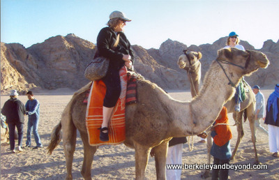 EGYPT-Sharm-camel ride-Carole-c Ted Heck-fnl-400pix