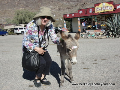 ARIZONA-OATMAN-Carole+burro-c2015 Peggy Bendel-400pix