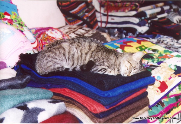 29-cat gallery-Peru-Aguas Calientes-cat sleeping in souvenir stall-c Carole Terwilliger Meyers