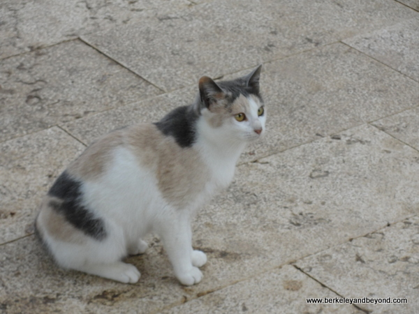 32-cat gallery-Israel-Galilee-Zippori National Park-c2012-Carole Terwilliger Meyers-600pix
