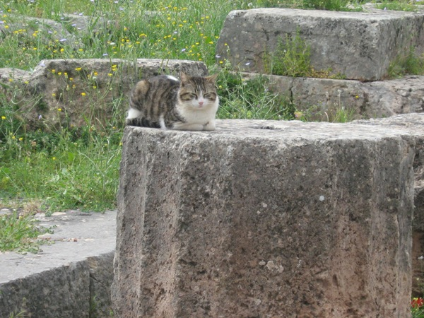 51-cat gallery-Greece-Delphi-c Chrysoula Manika
