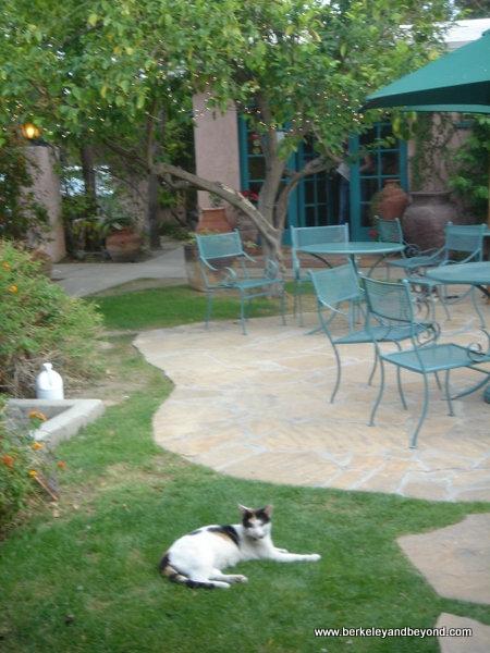 59-cat gallery-U.S.-Palm Springs-California-Casa Cody-c Carole Terwilliger Meyers-600pix