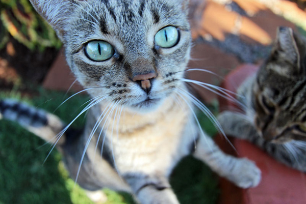 Photos of cats around the world 1 - Blue clinic firenze bagno a ripoli ...