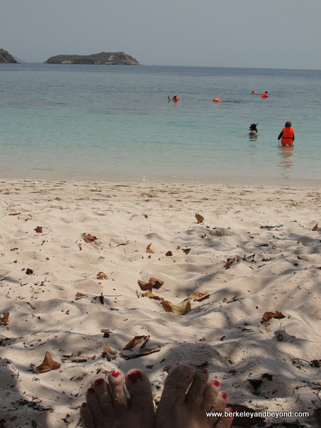 29-toes-Indonesia-Komodo Island-Pink Beach-c2015 Carole Terwilliger Meyers-600pix