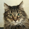 Polly-at SPCA-2007-100pix1