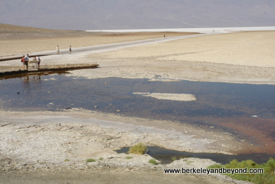 DEATH VALLEY-Bad Water-scenic-c Carole Terwilliger Meyers-400pix