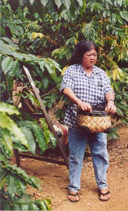 Big Island-Kona Coffee Living History Farm-Bean Picker-c Carole Terwilliger Meyers